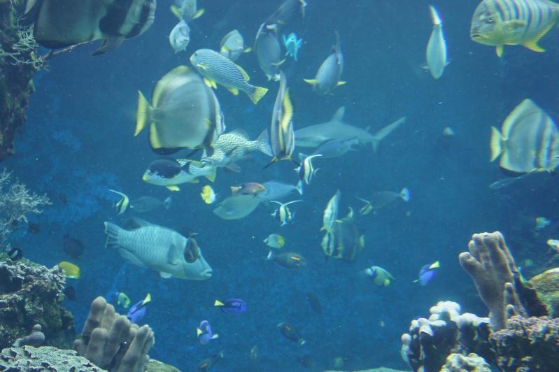 L'aquarium de Nouméa [Nouvelle Calédonie] + Baleines! Dsc02224