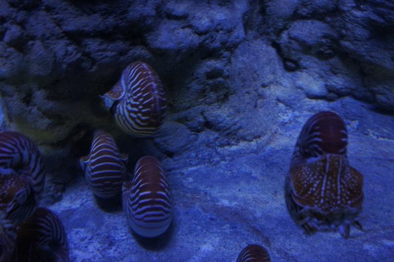 L'aquarium de Nouméa [Nouvelle Calédonie] + Baleines! Dsc02225