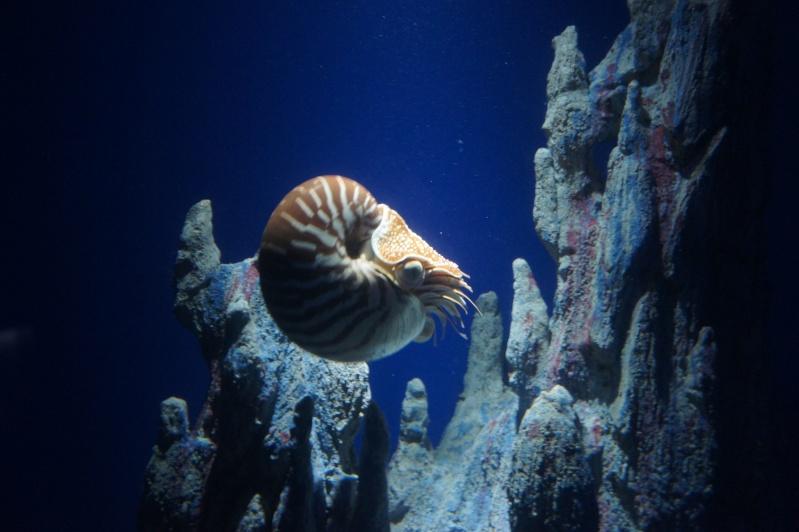 L'aquarium de Nouméa [Nouvelle Calédonie] + Baleines! Dsc02226