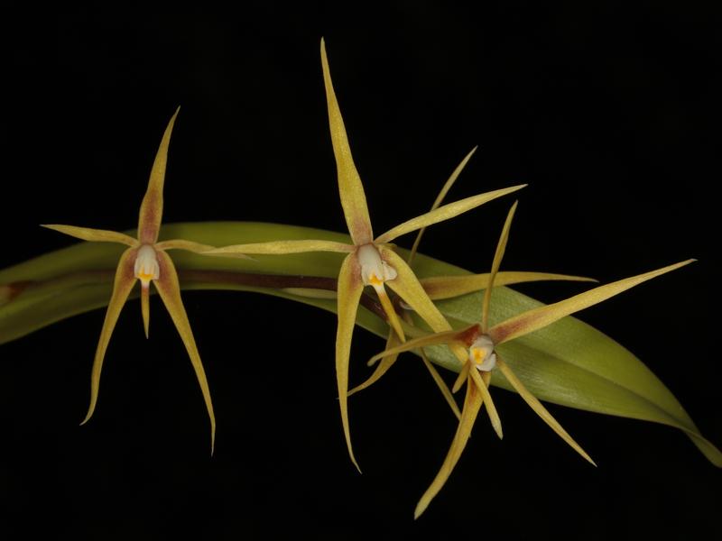 Sonstiges aus Süd- und Mittelamerika Encycl10