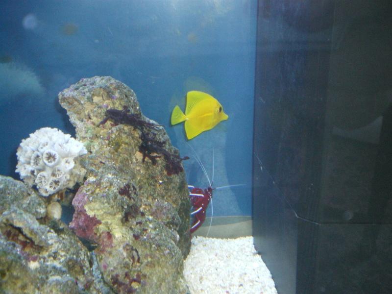 le grande discution concernant la taille du poisson  Photo_43