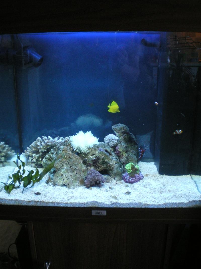 le grande discution concernant la taille du poisson  Photo_44
