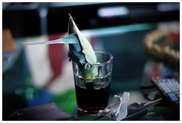 Kiwi et Coca, les p'tits monstres Img_4512
