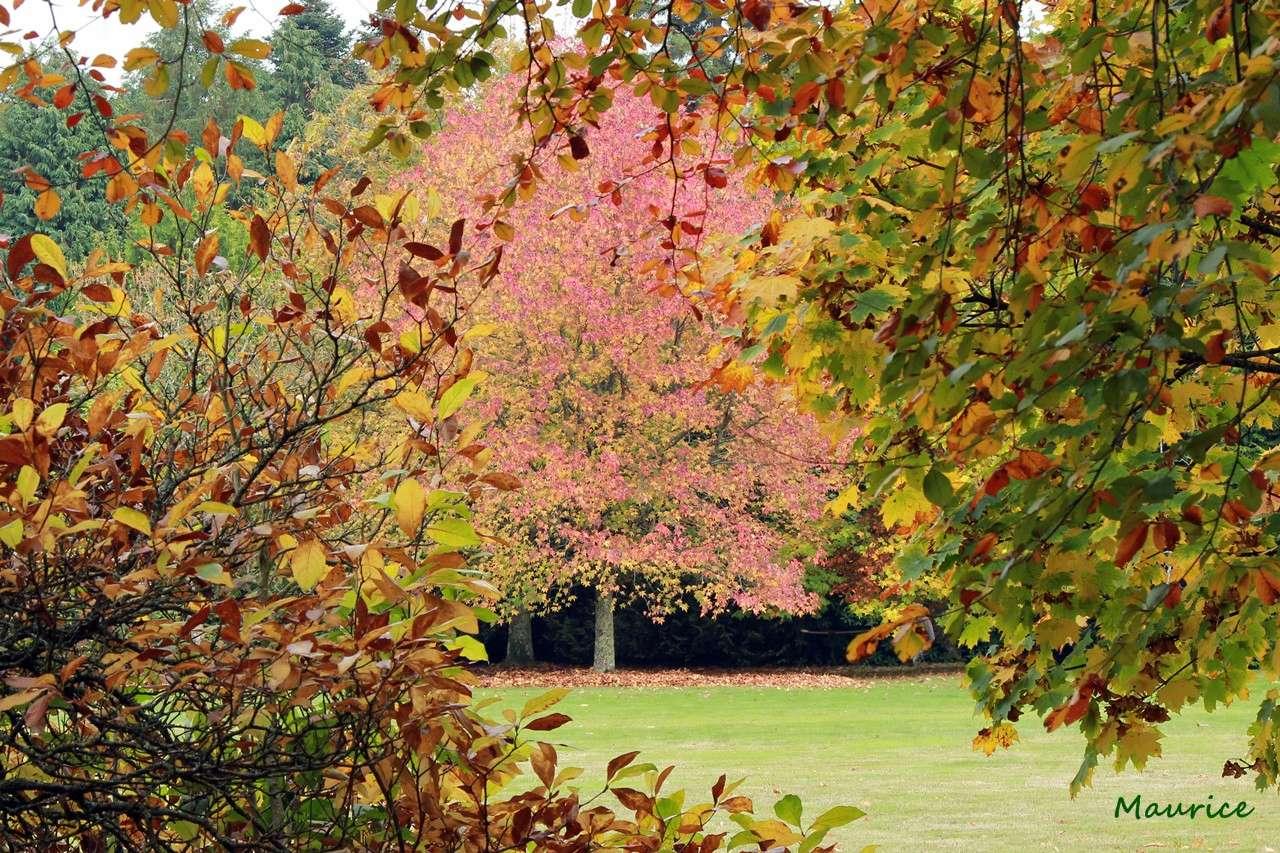 Couleurs d'automne... - Page 2 Img_0010