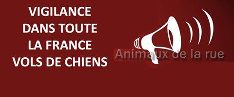 Vigilence - Vol d'Animaux Vigie-10