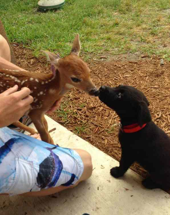 tendresse animale Unname41