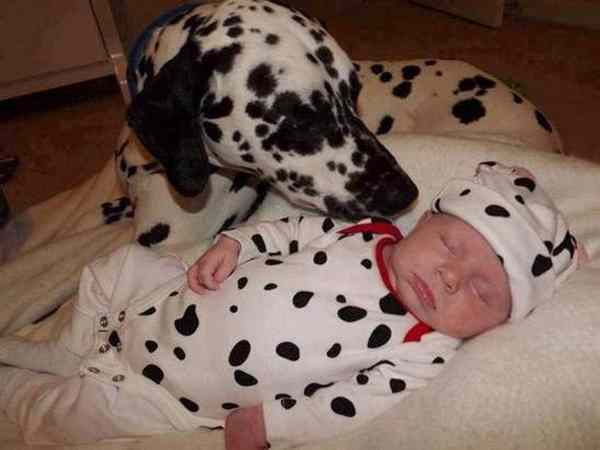 tendresse animale Unname44