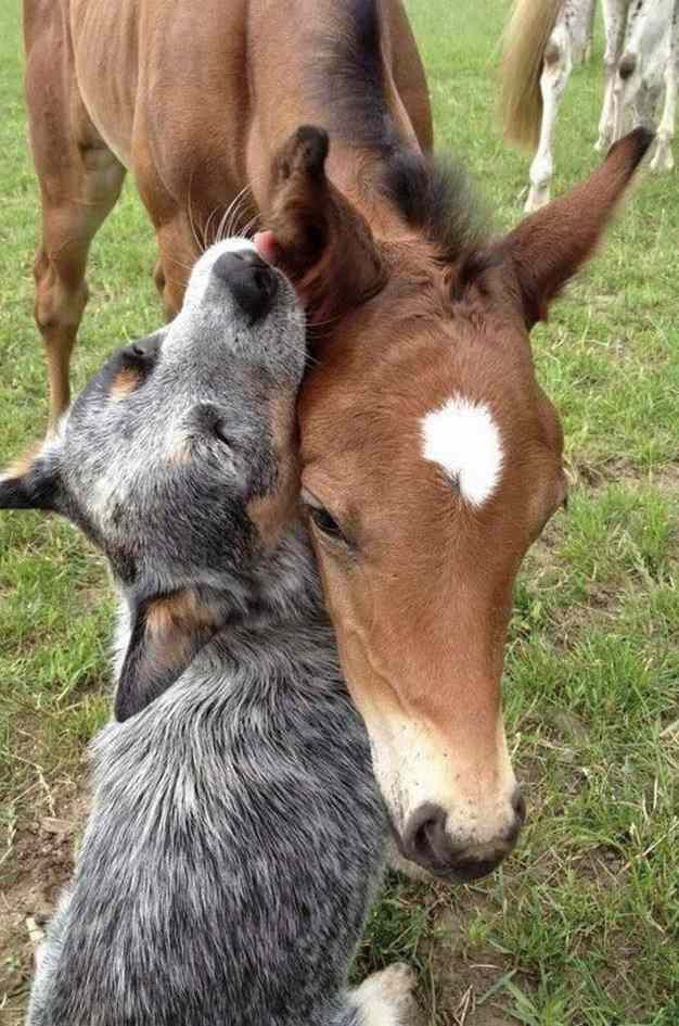 tendresse animale Unname51
