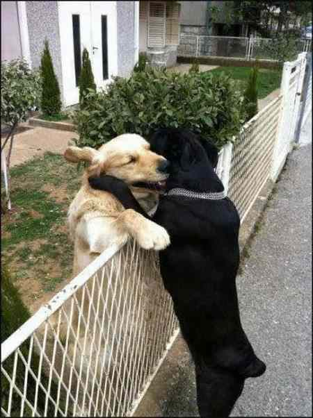 tendresse animale Unname54