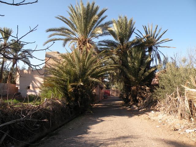 [Maroc Camp/Généralités] Camping Tinnoubga Bouizakarne 13_pal10