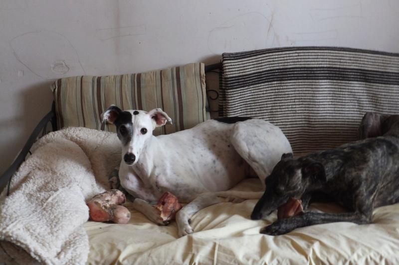 "Les"" Doggies"" de La Rive - Page 11 Vacanc20"