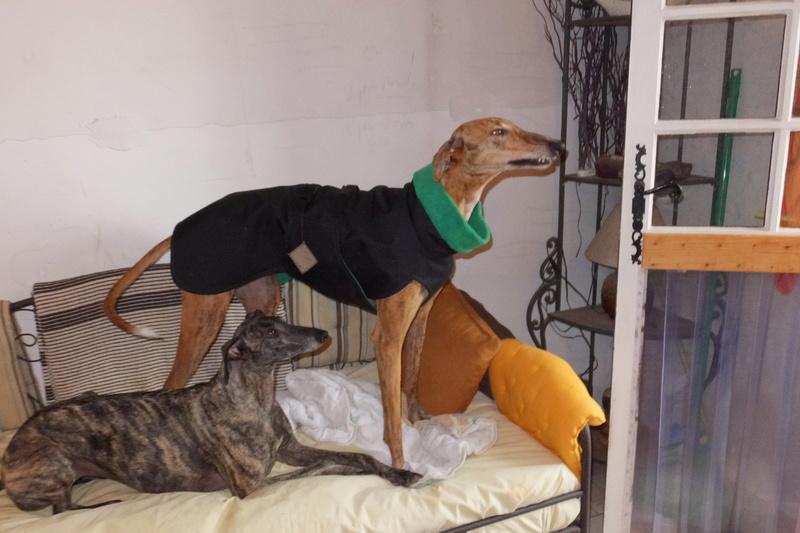 "Les"" Doggies"" de La Rive - Page 11 Vacanc23"