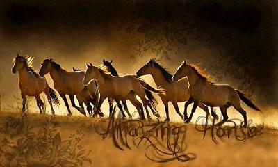 Amazing Horses 22222210