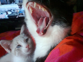 Nesta & Lubie Photo014