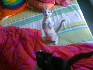 Nesta & Lubie Photo016