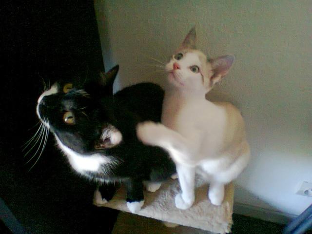 Nesta & Lubie Photo021