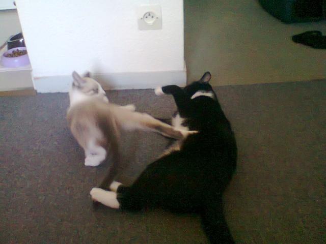 Nesta & Lubie Photo022