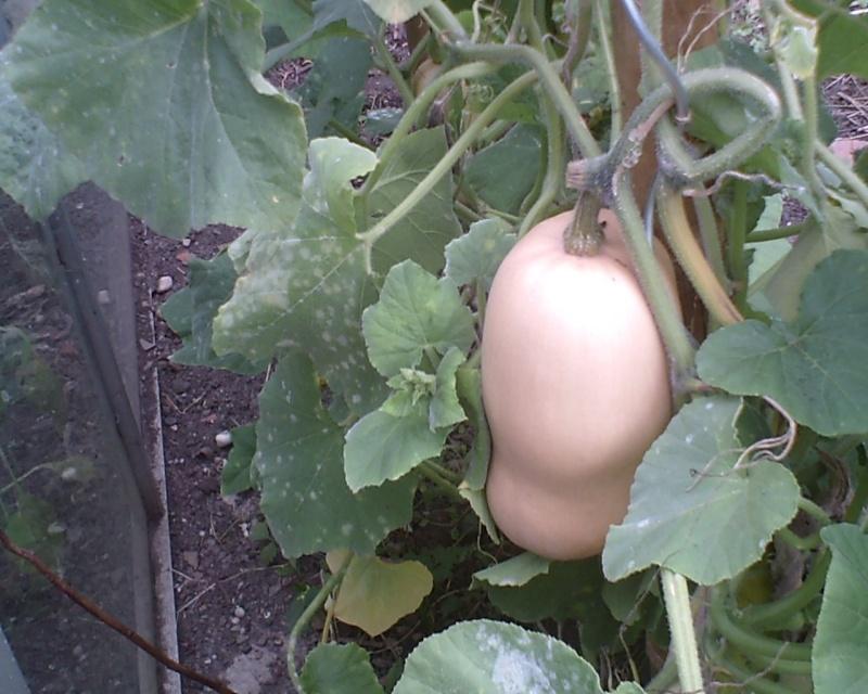 Travaux d'automne au jardin : rien ne se perd, tout se transforme ! Butter10