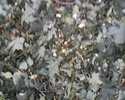 Travaux d'automne au jardin : rien ne se perd, tout se transforme ! Broyeu13
