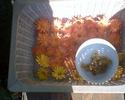 Travaux d'automne au jardin : rien ne se perd, tout se transforme ! Fleurs11