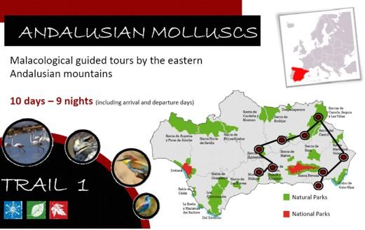 Visites malacologiques dans les montagnes Andalouses Pagina12