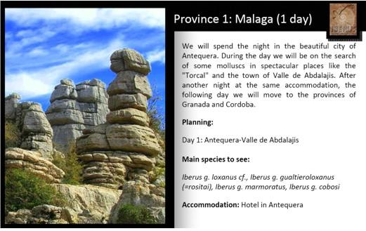 Visites malacologiques dans les montagnes Andalouses Pagina13