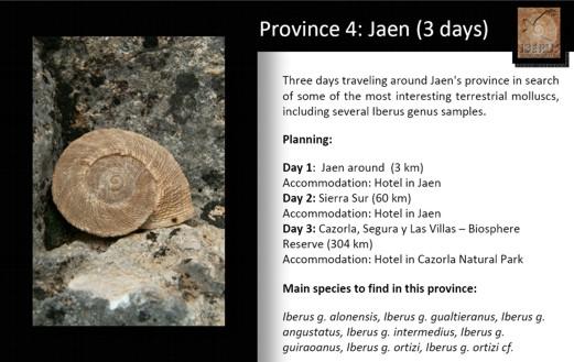 Visites malacologiques dans les montagnes Andalouses Pagina15