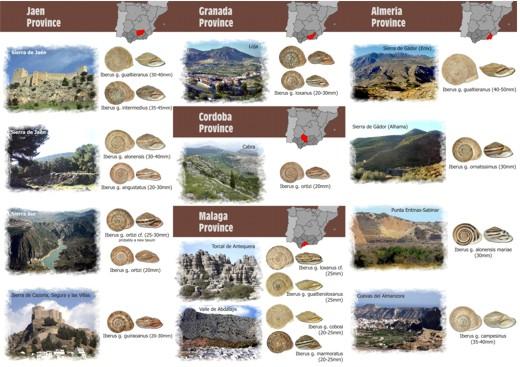 Visites malacologiques dans les montagnes Andalouses Pagina18