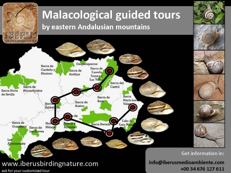 MALACOLOGICAL GUIDED TOURS BY EASTERN ANDALUSIAN MOUNTAINS Tours11