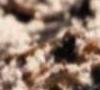 Primevalkreaturen - Erratespiel - Seite 4 Primev22