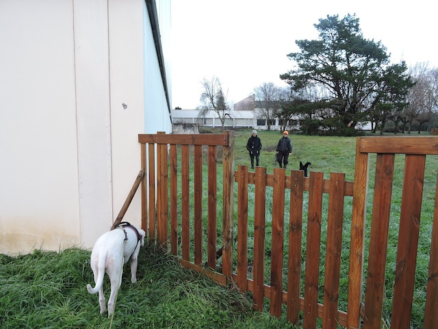 Esprit Canin 33 - Nadine Chastang - Page 26 Dscn5529
