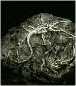 Malitia Parasitus Plagas10