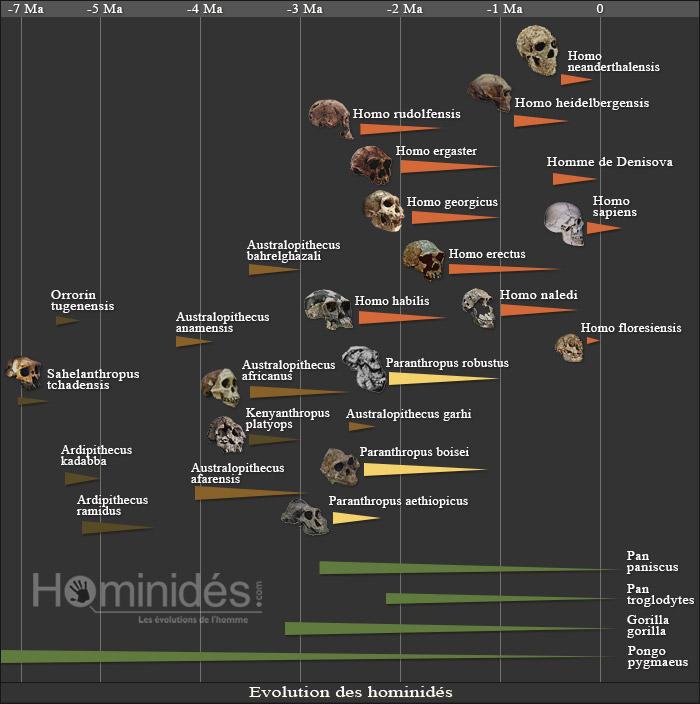 L'évolution de la population humaine en vidéo Arbre-10