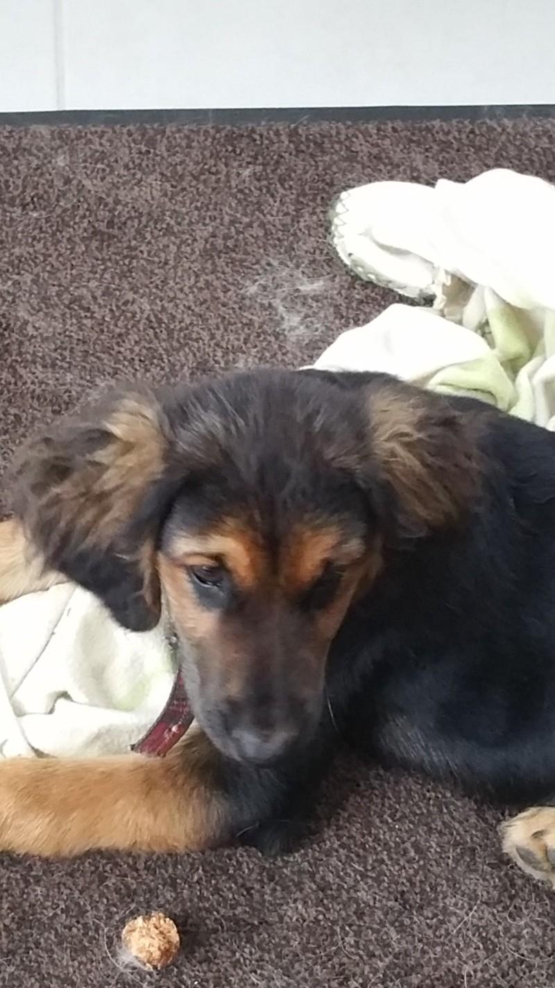 [Clos]Visite post adoption (chien) à Châteauneuf d'Ille et Vilaine pour Lully 20150810