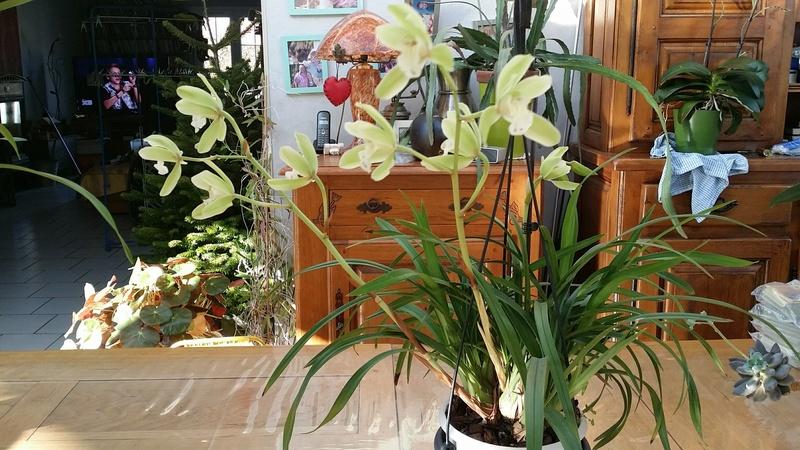 veranda - ma véranda, mon petit paradis végétal ... - Page 39 20161217