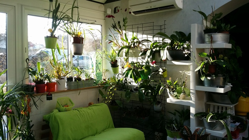 veranda - ma véranda, mon petit paradis végétal ... - Page 39 20161218