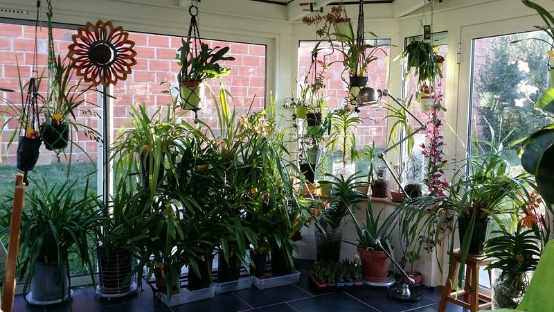 veranda - ma véranda, mon petit paradis végétal ... - Page 39 20161219