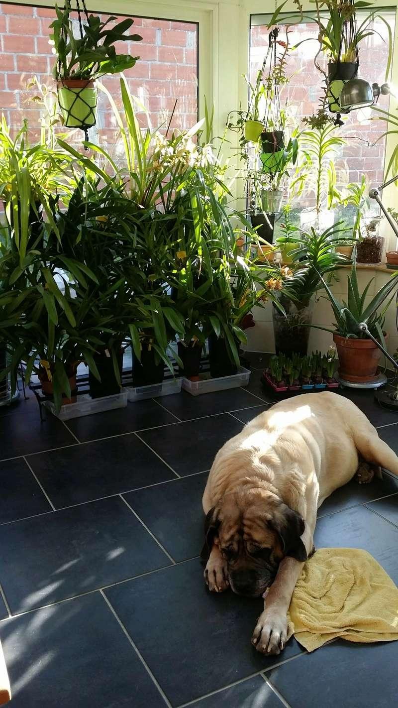veranda - ma véranda, mon petit paradis végétal ... - Page 39 20161220