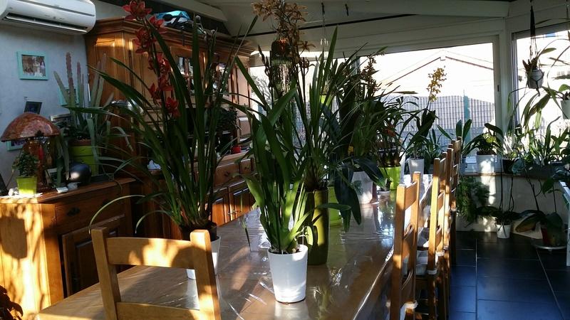 veranda - ma véranda, mon petit paradis végétal ... - Page 39 20161221