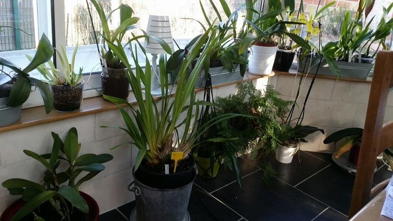 veranda - ma véranda, mon petit paradis végétal ... - Page 39 20161222