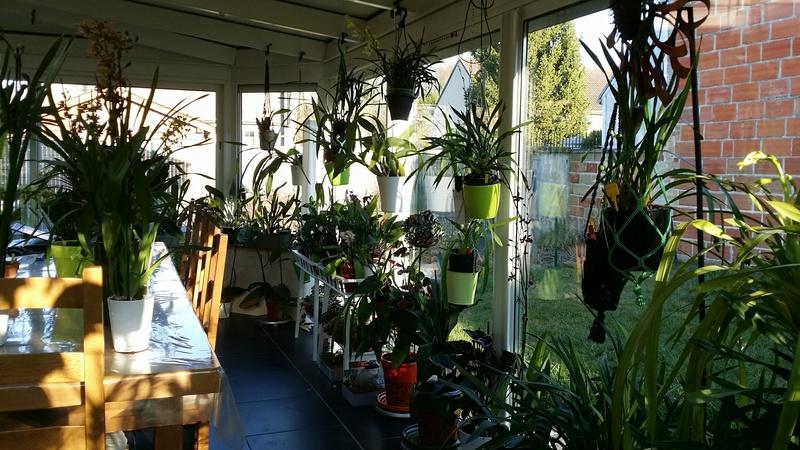 veranda - ma véranda, mon petit paradis végétal ... - Page 39 20161223