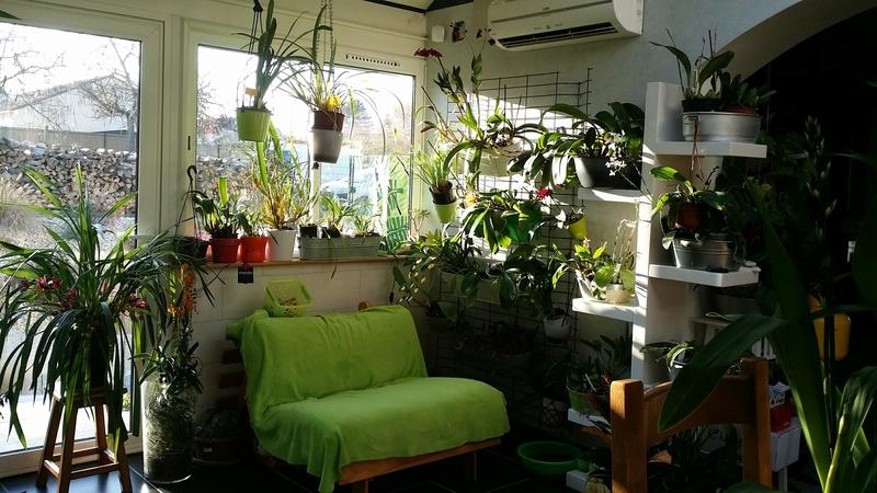 veranda - ma véranda, mon petit paradis végétal ... - Page 39 20161224