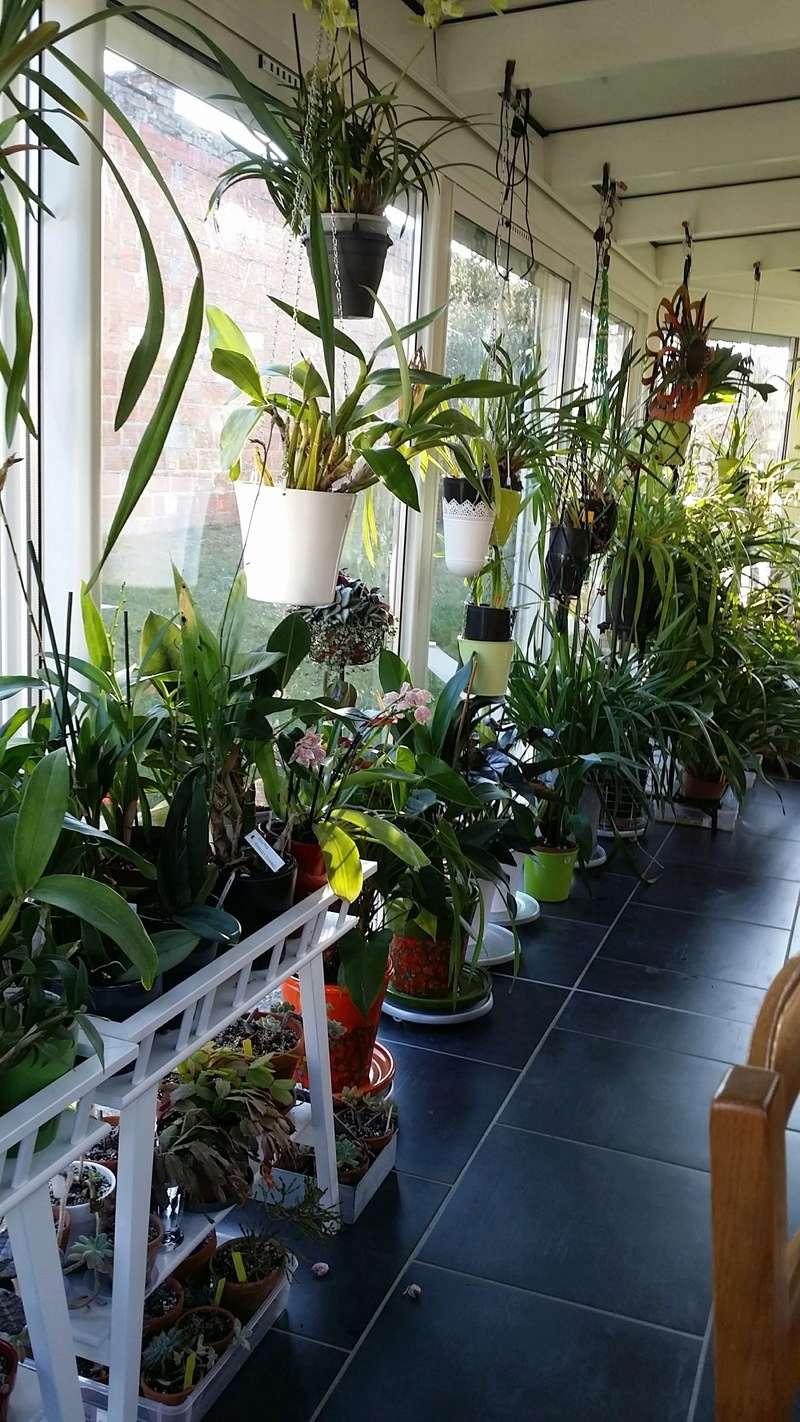 veranda - ma véranda, mon petit paradis végétal ... - Page 39 20161227
