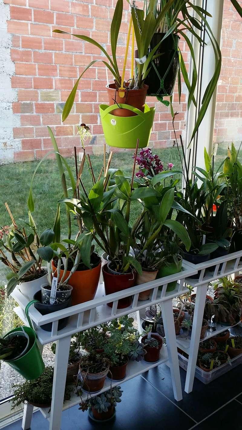 veranda - ma véranda, mon petit paradis végétal ... - Page 39 20161228