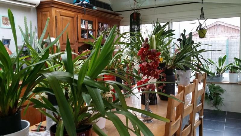 ma véranda, mon petit paradis végétal ... - Page 40 20170250