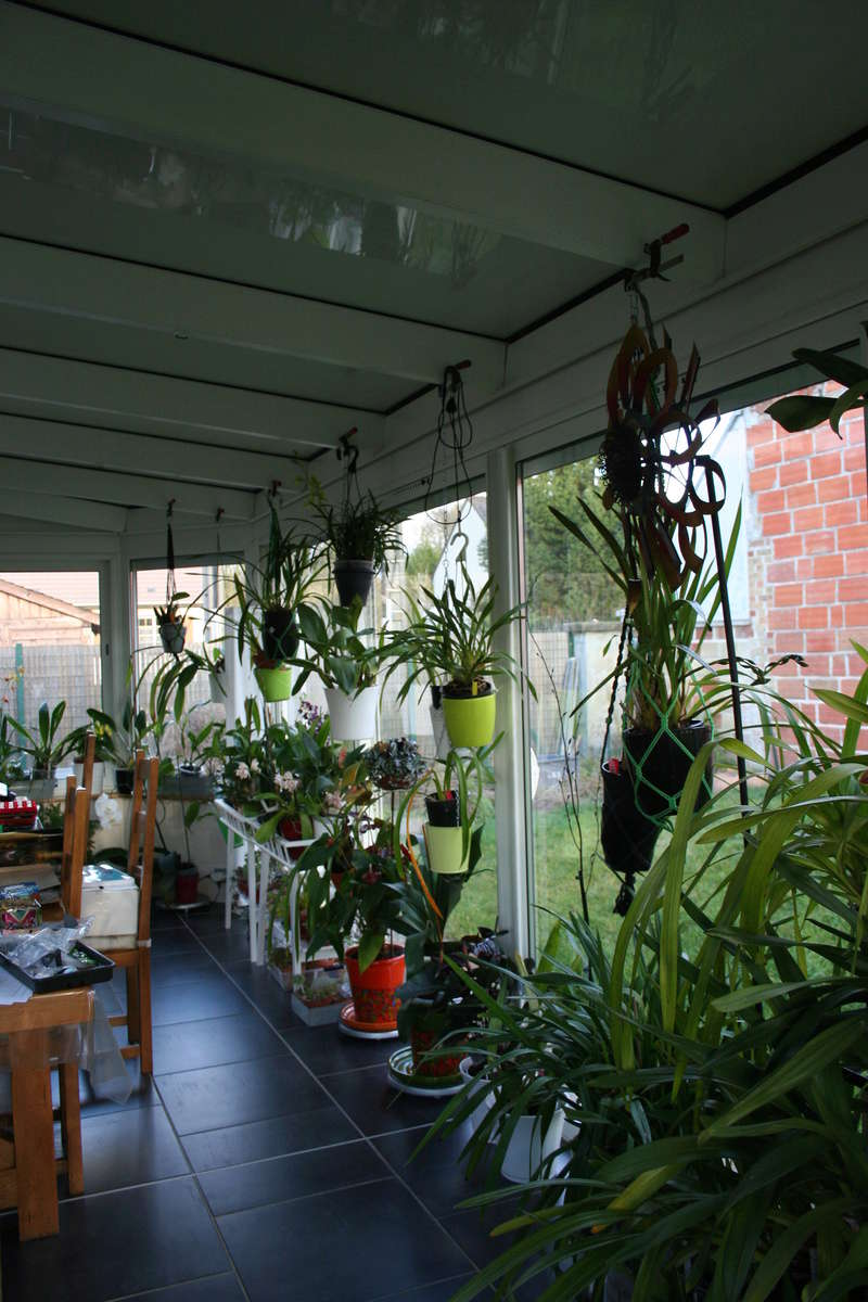 veranda - ma véranda, mon petit paradis végétal ... - Page 39 Img_3810
