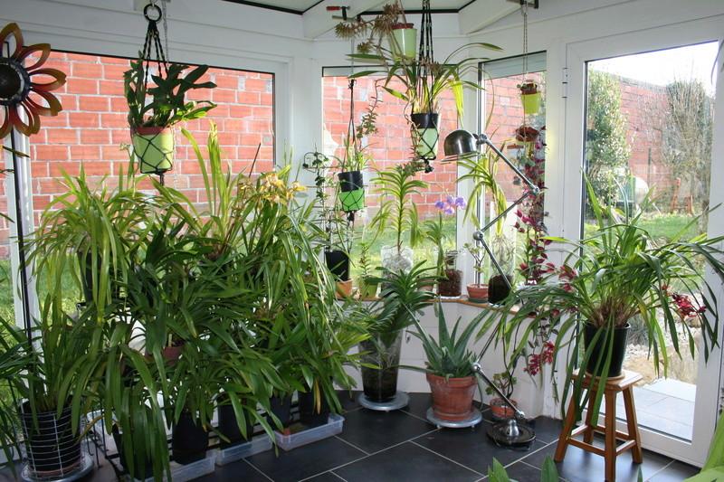 veranda - ma véranda, mon petit paradis végétal ... - Page 39 Img_3812