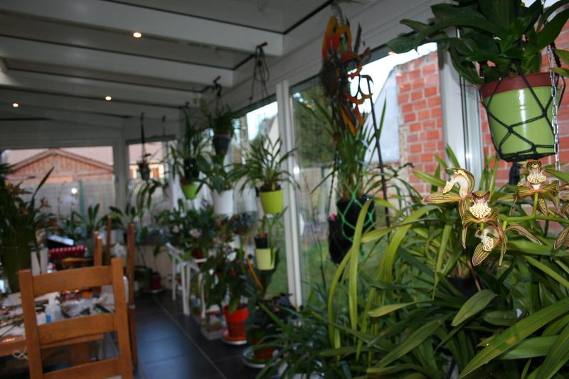 veranda - ma véranda, mon petit paradis végétal ... - Page 39 Img_3910