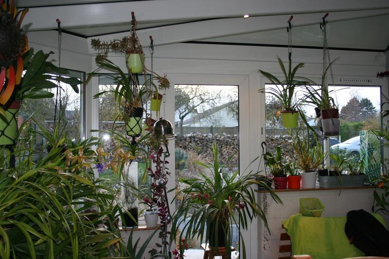 veranda - ma véranda, mon petit paradis végétal ... - Page 39 Img_3911