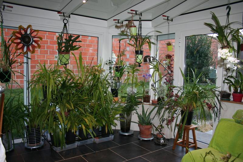 veranda - ma véranda, mon petit paradis végétal ... - Page 39 Img_3912